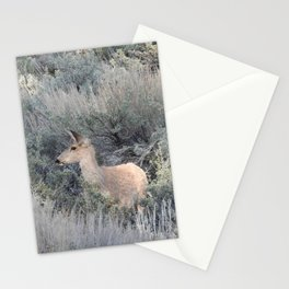 Mule Deer, Wildlife, Wild Animals Stationery Cards