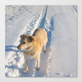 Dogs | Dog | Waiting Dog | Golden Lab Canvas Print