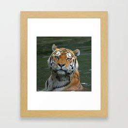 Tiger_2015_0622 Framed Art Print