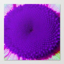 Purple Vineyard Daisy Canvas Print
