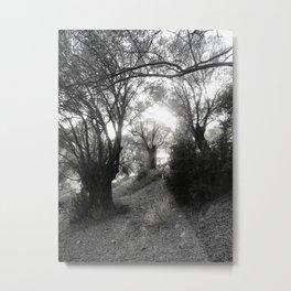 Olive Wood Metal Print