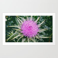 Milk Thistle Art Print