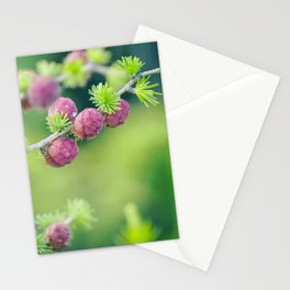 Young cones coniferous in the spring in the garden Stationery Cards