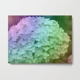 Rainbow Hydrangea Metal Print