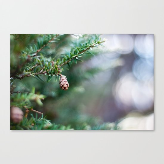 Tiny Pine Cone Canvas Print