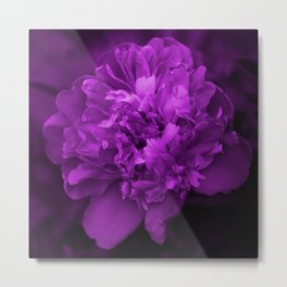 Peony In Ultra Violet Color #decor #society6 #buyart Metal Print