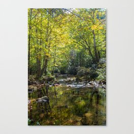 Great Smoky Mountains - Creek Canvas Print