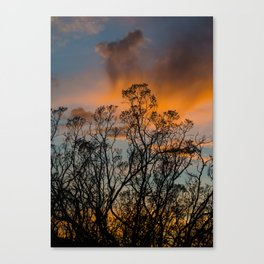 Desert Flora At Sunset - Bush  Canvas Print