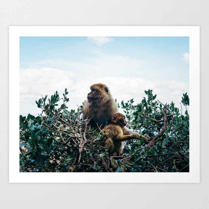 Macaque Mother and Daughter Art Print