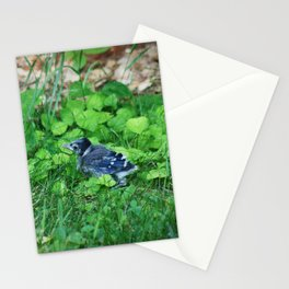 Baby Bluejay Bird Color Photo Stationery Cards