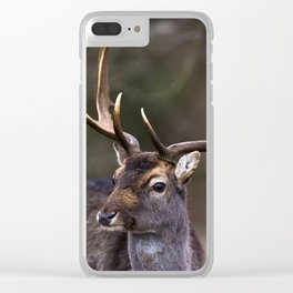 Close-up of fallow deer with huge antlers. Clear iPhone Case