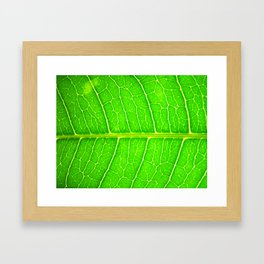 Macro Leaf no 6 Framed Art Print