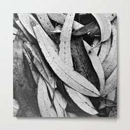 Fallen Eucalyptus Leaves Texture Black and White Metal Print
