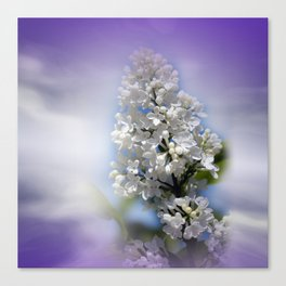 white lilac on textured background -a- Canvas Print
