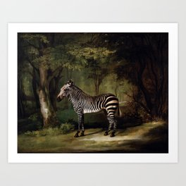 George Stubbs - Zebra Art Print