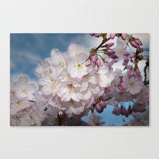 Under A Cherry Tree Canvas Print