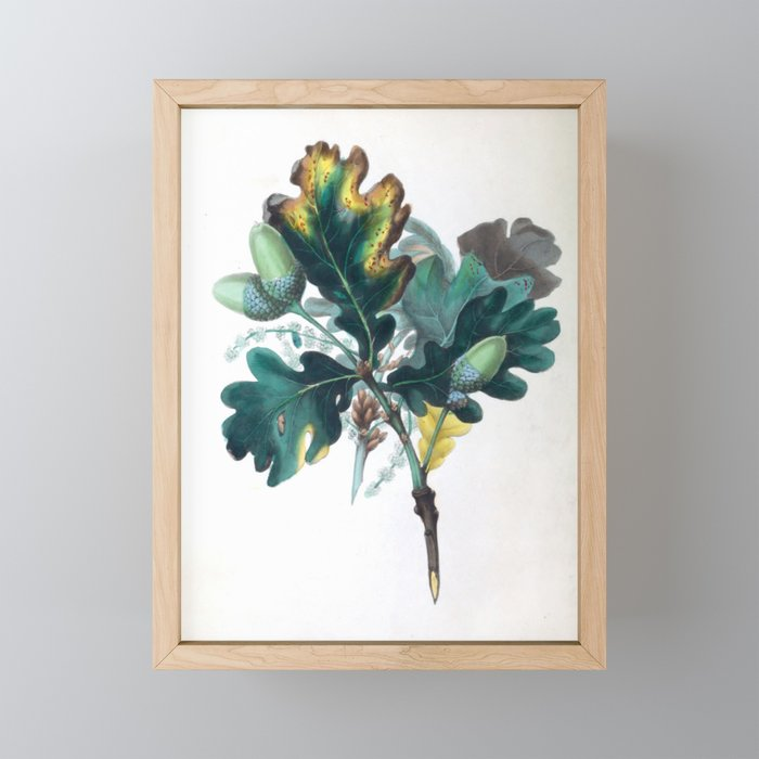 """The Oak, from """"The Spirit of the Woods,"""" 1849 (benefiting the Arbor Day Foundation) Framed Mini Art Print"""