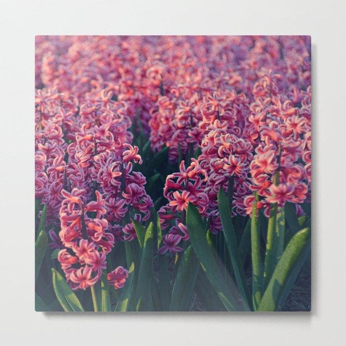 Hyacinth field #2 Metal Print