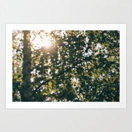 Memory of Summer Art Print