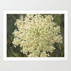 Botanical - Queen Anne's Lace, Bishops Lace Flower Art Print