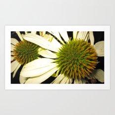 2 flower  Art Print