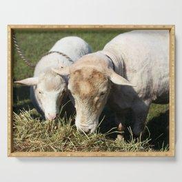 Feeding Lambs Serving Tray