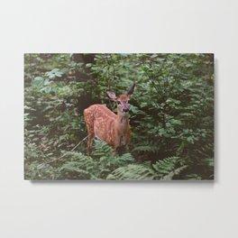 Forest Deer XXV Metal Print