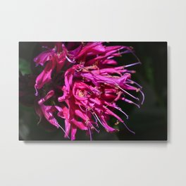 Pineapple Sage, Pink Flowers Metal Print