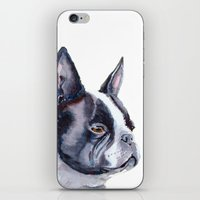 terrier iPhone & iPod Skins featuring Boston terrier by Doggyshop