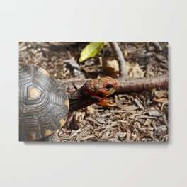Red-Footed Tortoise III Metal Print