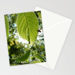 Sunlight Canopy III Stationery Cards