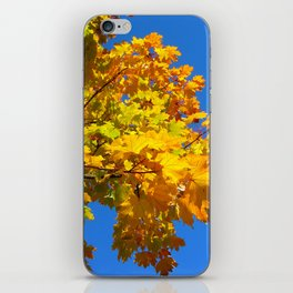 autumn colors iPhone Skin
