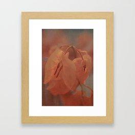 Sunny Bougainville( glow) Framed Art Print