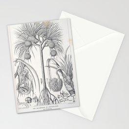 Tree pandanus utilis L 6 Stationery Cards