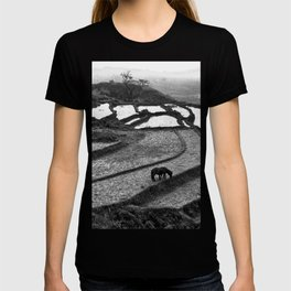 Horses on rice paddies in northern Vietnam T-shirt