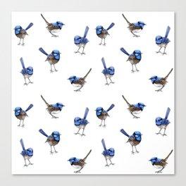 Blue Wrens on White Canvas Print