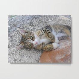 Cute Eddie Kitten Portrait  Metal Print