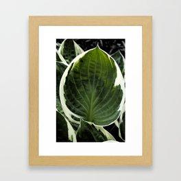 Hosta Leaf With Water Drop Framed Art Print