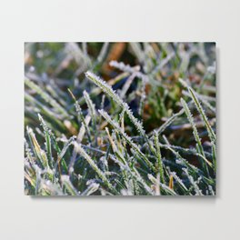 Frosty Morning Dew Metal Print