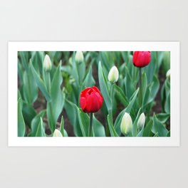 Spring flowers blooming in April and May on lawns, bushes and trees in the city park. Art Print