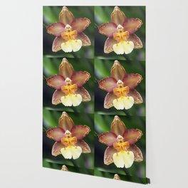 Longwood Gardens Orchid Extravaganza 73 Wallpaper