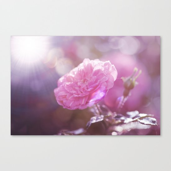 Autumn Roses at backlight  - Roses and Flowers Canvas Print