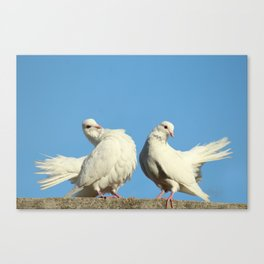 Couple of White Doves Canvas Print