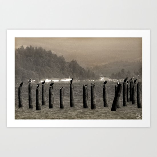 Columbia River Cormorants Birds Art Print