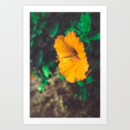 Hawaiian Flowers Art Print