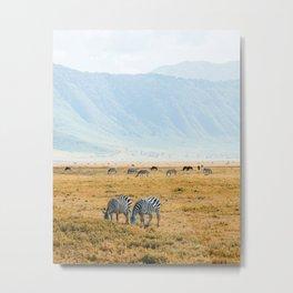Zebras in Tanzania Metal Print