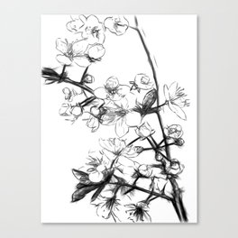 Cherry Blossoms Minimal Drawing Canvas Print