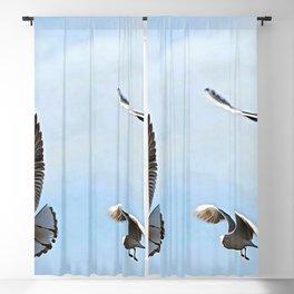 Three Black Headed Gulls Of The Bosphorus Art Blackout Curtain