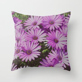 Purple african daisies - Spring in the Southern Hemisphere Throw Pillow