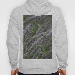 Longwood Gardens Autumn Series 413 Hoody